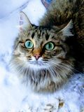 Groene ogen Stock Foto