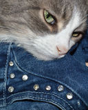 Groene ogen en witte bergkristallen Royalty-vrije Stock Afbeelding