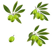 Groene olijf Royalty-vrije Stock Afbeelding