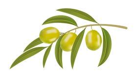 Groene olijven op tak Royalty-vrije Stock Foto