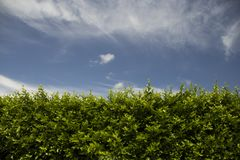 Groene omheining met een blauwe hemel stock afbeeldingen