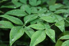 Groene Onderbush-Douche Royalty-vrije Stock Foto's
