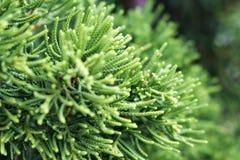 Groene onscherpe bosinstallatie stock afbeelding