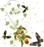 Groene orchideeën en drie vlinders stock illustratie