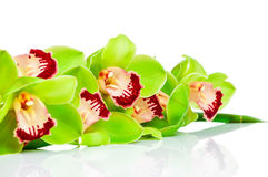 Groene Orchidee stock afbeelding