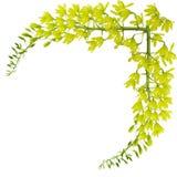 Groene Orchidee Stock Foto