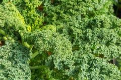 Groene organische blauwe en purpere groente Stock Foto