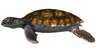 Groene Overzeese Schildpad vector illustratie