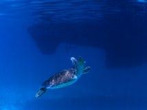 Groene Overzeese Schildpad Royalty-vrije Stock Fotografie