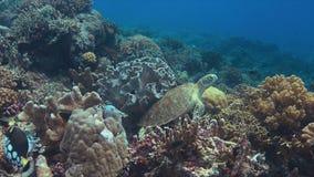 Groene Overzeese Schildpad Royalty-vrije Stock Afbeeldingen