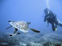 Groene overzeese schildpad en duiker Stock Afbeeldingen