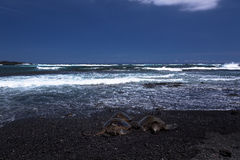 Groene overzeese schildpadden bij het park van de punalu'ustaat Stock Fotografie