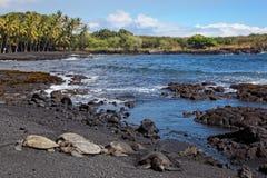 Groene Overzeese Schildpadden op het Zwarte Strand van het Zand Stock Foto