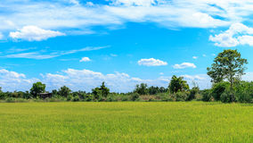 Groene Padievelden Thailand Royalty-vrije Stock Afbeeldingen