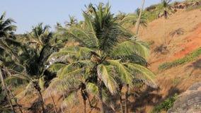 Groene palm in de wind tegen een helling met droog gras stock video