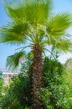 Groene palm door het overzees op een zonnige dag stock afbeelding