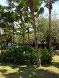 Groene palm drie van de Dominicaanse Republiek van Puntacana Stock Fotografie