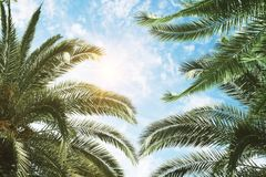 Groene palm en blauwe hemelachtergrond Stock Foto