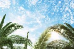 Groene palm en blauwe hemelachtergrond Royalty-vrije Stock Foto's