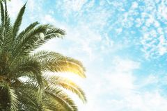 Groene palm en blauwe hemelachtergrond Stock Fotografie