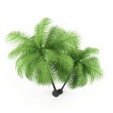 Groene palm op een witte achtergrond. Royalty-vrije Stock Afbeeldingen