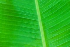 Groene palmbladen Stock Afbeelding