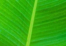 Groene palmbladen Stock Afbeeldingen