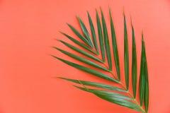 Groene palmbladen op het oranje palmblad van de achtergrond hoogste meningsbetel stock foto