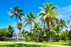 Groene palmen royalty-vrije stock foto