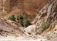 Groene palmen in een oase in de woestijn tegen de achtergrond van rotsen in van Zuid- Egypte Dahab Sinai royalty-vrije stock afbeeldingen