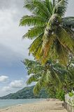 Groene palmen en een witte omheining bij het strand en de groene heuvels Stock Afbeelding