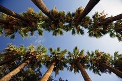 Groene palmen op het eiland van Zakynthos in Griekenland Stock Afbeeldingen