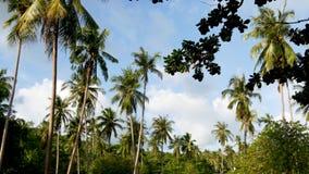 Groene palmen tegen bewolkte hemel Majestueuze mening die van prachtige tropische installaties tegen blauwe bewolkte hemel op zon stock videobeelden