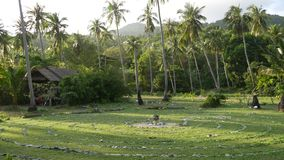 Groene palmen tegen bewolkte hemel Majestueuze mening die van prachtige tropische installaties tegen blauwe bewolkte hemel op zon stock video