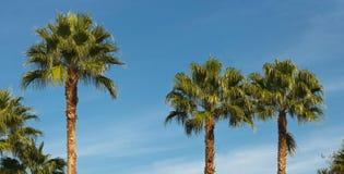 Groene palmen tegen blauwe hemel Royalty-vrije Stock Afbeelding
