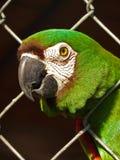 Groene papegaai Royalty-vrije Stock Fotografie