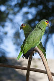 Groene papegaai in de wildernis en bokeh Royalty-vrije Stock Afbeeldingen