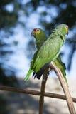Groene papegaai in de wildernis en bokeh Royalty-vrije Stock Foto