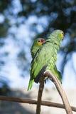 Groene papegaai in de wildernis en bokeh Stock Fotografie