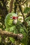 Groene papegaaizitting op een boomtak stock fotografie