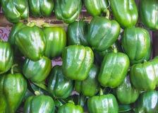 Groene paprika's groene groene paprika's in natuurlijke tuin Royalty-vrije Stock Afbeelding