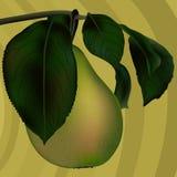 Groene peer Royalty-vrije Stock Afbeeldingen
