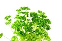 Groene peterselie Stock Foto