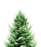 Groene Pijnboom voor Kerstmis Stock Afbeeldingen
