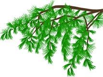 Groene pijnboomtak met lange die naalden op wit worden geïsoleerd stock illustratie