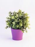 Groene plastic bloem in een violette pot op witte achtergrond stock afbeeldingen