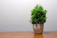 Groene plastic boom in de witte pot op de houten lijst royalty-vrije stock foto