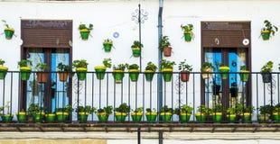 Groene potten stock afbeeldingen