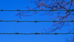 Groene prikkeldraadomheining tegen natuurlijke achtergrond van duidelijke blauwe hemel en vage boomtak Stock Afbeeldingen
