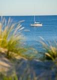 Groene riet en ocean.GN stock fotografie